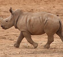 Run Baby Rhino Run by StuBear22