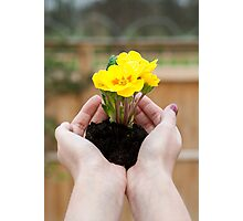 Hands holding yellow flowers.  Photographic Print
