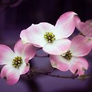 Dogwood Daze by Cathy Donohoue