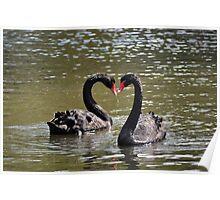 Black Swan Pair ~ Shepreth Wildlife Park ~ Hertfordshire, 2013 Poster