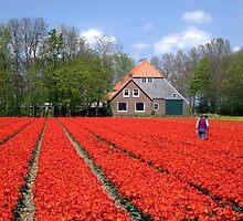 The Tulip Farmer by Jo Nijenhuis