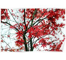 Red Maple of love & hope Poster
