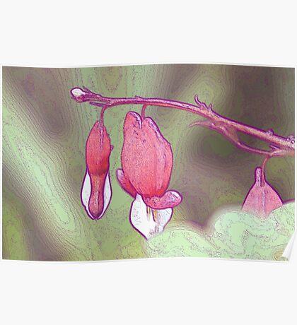 Bleeding Heart Flower  Poster