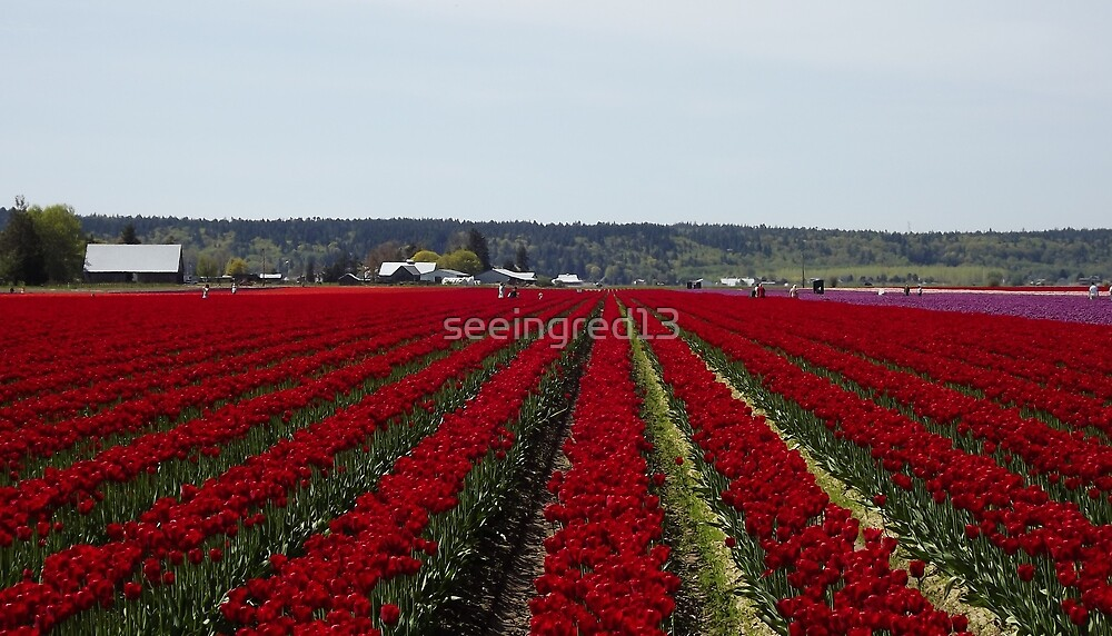 "RED for ""Joy"" - Jump'n for Joy in the Tulip Patch! by seeingred13"