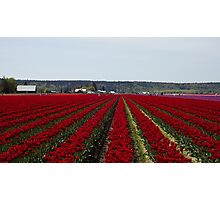 """RED for """"Joy"""" - Jump'n for Joy in the Tulip Patch! Photographic Print"""