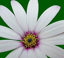 flower by clayton  jordan