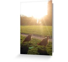 Hens in sunshine Greeting Card