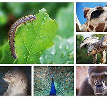 Animal Magic by Ingramsimages
