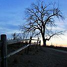 Rustic Trail by Greg Belfrage