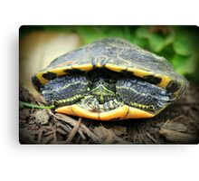 Shelled Turtle Canvas Print