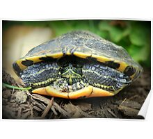 Shelled Turtle Poster