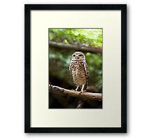 Burrowing Owl I Framed Print