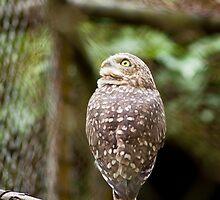 Burrowing Owl III by Ricardo Martins