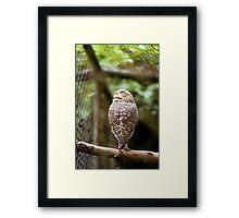 Burrowing Owl III Framed Print