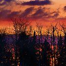 Fire in the Sky by camfischer