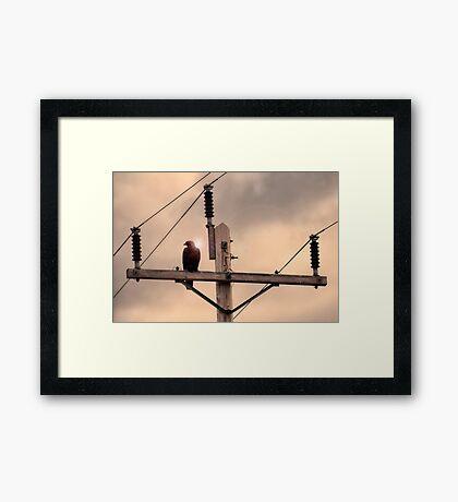 Electric Eagle Framed Print