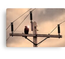 Electric Eagle Canvas Print