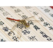 Dragonfly on Japanese Parchment Photographic Print