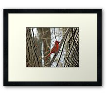 Royal Redbird Framed Print