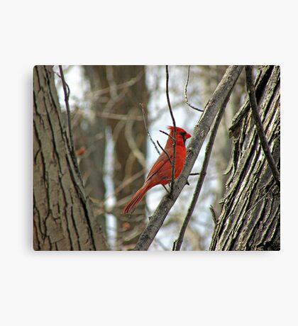 Royal Redbird Canvas Print