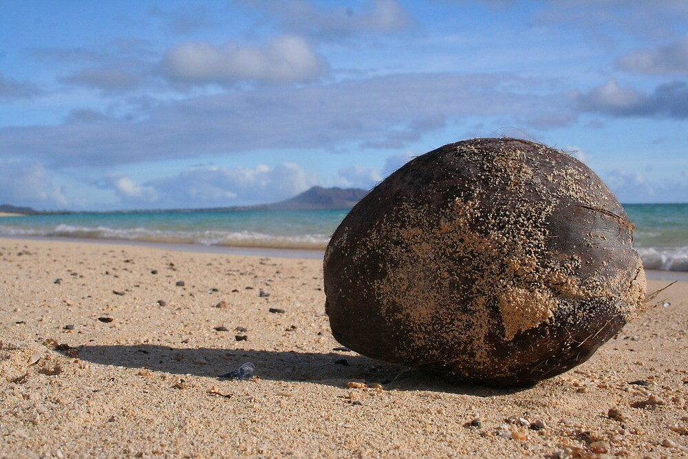 Nut on the Beach by Randy Richards