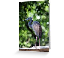 Blue Heron perched Greeting Card