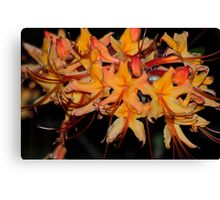 Flame Azalea at Dusk Canvas Print