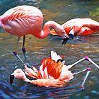 Flamingos by Savannah Gibbs