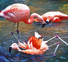 Flamingos by Savannah Gibbs