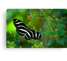 A Zebra Longwing Butterfly  Canvas Print