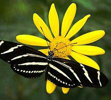 Butterfly Magic  by Saija  Lehtonen
