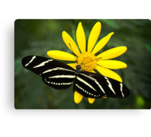 Butterfly Magic  Canvas Print