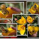 PLAYING WITH MY MY HONEY BEES  by Betsy  Seeton