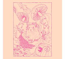 Hamster In Wonderland Pink Version Photographic Print