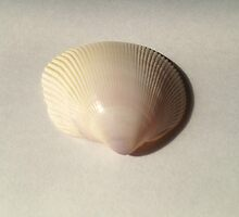 Shell by Sorcha Whitehorse ©