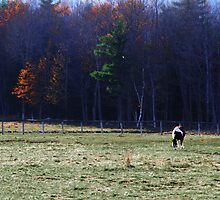 Late Fall Color by Nazareth