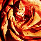 La Vie En Rose by Apostolos Mantzouranis