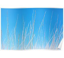 Golden Grasses against a Clear Blue Sky Poster
