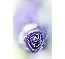 Purple breeze....(soft 2) Photographic Print