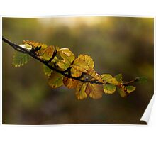 fagus dreaming Poster