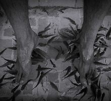 Fish Pedicure - Siem Reap by Jane  Earle Photography