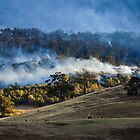 Forest fire, Tasmania, by Kathy Behrendt