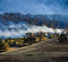Forest fire, Tasmania, by Kathy Behrendt