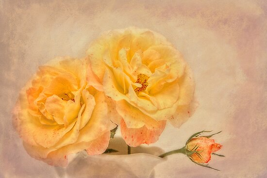 Roses. by Lyn Darlington