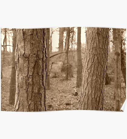 Forest - Detailed Bark Poster