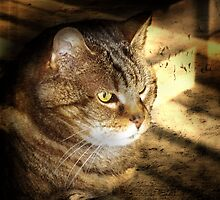 a tribute to Kaa, my tabby-cat sister, 20 years old... by annacuypers