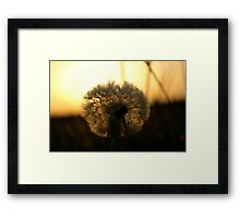 Natures Tooth Brush Framed Print