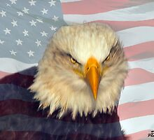 "Symbol of American Freedom - The Bald Eagle by Michael "" Dutch "" Dyer"