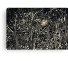 Thoughts of Interrupted Play Canvas Print