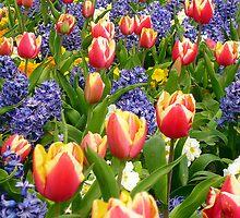 Spring Flowers by Antoinette B